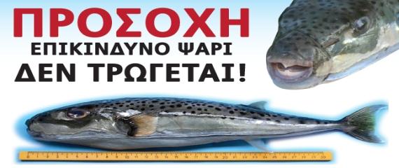 Λαγοκέφαλος Προσοχή, επικίνδυνο ψάρι, δεν τρώγεται!